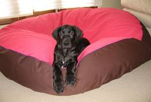 Puppies / Puppies of all breeds on Barka Parka pet beds
