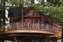 Tree house / Lots of huge trees