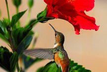 Birds and Butterflies /  Pássaros e Borboletas