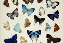 Botanical Insects