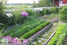 Vegie gardens an how to use space