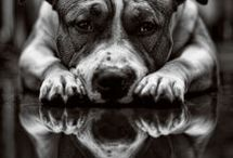 Pit Bull Love / These dogs deserve all the love they can get, as all dogs and animals do. But Pitts and staffed have a special place in my heart - The Underdog