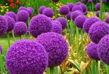 Fleurs pour le jardin