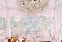 Beautiful Blooms / by Amanda Harris