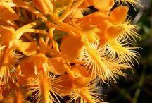 7-) Orkideler ( Orchids )
