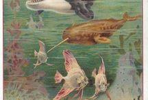 Sfere invisibili / All'interno degli habitat animali | 16 settembre 2011-19 febbraio 2012