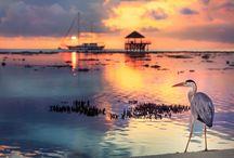 Maldives Travel Inspiration / Photos from Maldives.