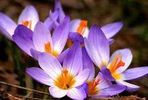 flores queridas