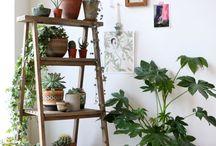 Plantas escadote p/ plantas