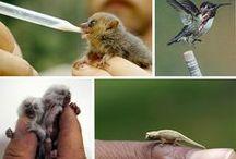 natura in miniatura