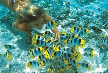 Travel to the Pacific / From Fiji holidays to Cook Island holidays, to incredible escapes in Samoa and quick getaways to Vanuatu, you just can't beat the Pacific. Only a short hop, skip and a jump from Australia's east coast, the South Pacific is a destination of paradisiacal island dreams, with unbelievable sights and the most welcoming and friendly of cultures. http://www.travellerschoice.com.au/pacific/