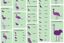 Zoology Passion / by Sharon Wegman