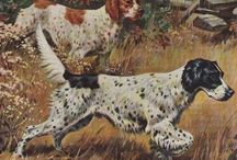 Setters and other dogs