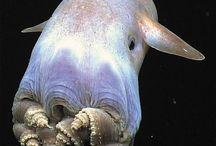 octupus - squid