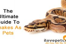 Snakes As Pets