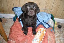 Rufus / Mein Hund Rufus