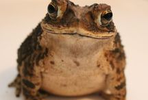 toad & frog
