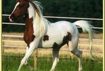 Beautiful Horses / by Mark 'n Marcia Snow-Eads