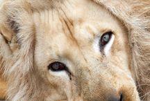 Beautiful Animal