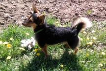 Filip / náš psík ♥