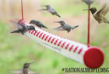 National Bird Feeding Month / February is National Bird Feeding Month! We're celebrating at our feeders and throughout our social media channels. Follow along on Instagram, Facebook and Twitter!