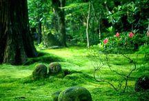 ogród / ciekawostki na temat ogrodów