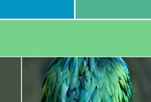 Color palettes / by Indiaphile