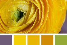 Палитры / Цветовые сочетания