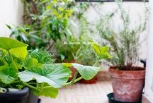 balcony vegetable garden