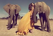 fashion photography / by David Mollé