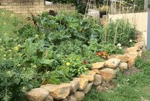 Grow Your Own Veggies  / Grow organic veggies, 5 mins alive ready to pick from your garden and see how amazing you will look and feel !!