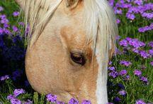 τέλεια αλογα
