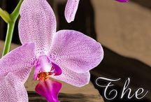 The Lost Orchid: historical fiction by Pamela Kelt / The Lost Orchid A hotbed of intrigue, deceit and danger http://www.amazon.com/Lost-Orchid-Pamela-Kelt-ebook/dp/B00JFXTKJU/ref=sr_1_1?s=digital-text&ie=UTF8&qid=1417188780&sr=1-1&keywords=the+lost+orchid  1885. Flora McPhairson finds a new home with her uncle, plant collector-turned hybridiser. But trouble lurks at the orchid houses in leafy Warwickshire. She is drawn into a notorious world as society clamours for more exotic blooms and ruthless plant hunters raid the Empire itself.