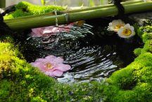 !!! Oriental Garden