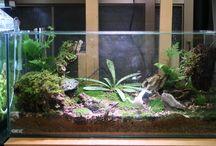 Moss Terarrium / Moss terarruim for indoor