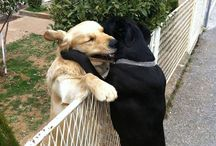 Hug or Kiss of the day / We all need at least four hugs a day to be healthy ~*)o(*~