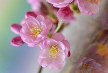 Printemps bourgeons et petites fleurs :-)