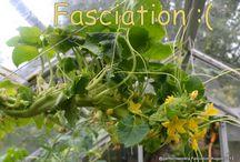 Gardensweekly Design - disorders in plants