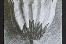 Dibujos de José. Joseph's drawings / Dibujos artísticos realizados con lápices de grafito, carbón y pastel. Artistic drawings made with pencils of graphite, charcoal and pastel.