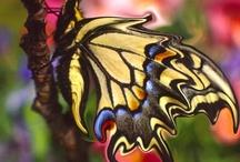 Insectos / Los #insectos también pueden ser bellos :)  #Animales #Naturaleza