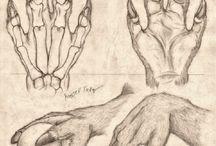 anthro anatomy