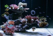 Patacake reef ideas / Reef aquarium