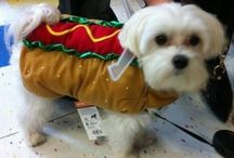 Dog Costumes / Ideas for Ernie and Yoshi
