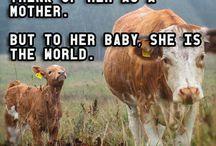 Vegan love.