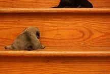 Puppies I want / by Hannah Grutza