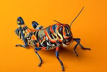 Bugs, Insects and Things / Fascinating creatures