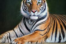 Tiger drawing inspiration