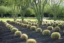 Cactus , Succulent etc.