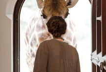I really want a giraffe! / by Kimberly Livingston