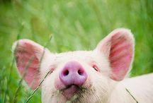 animals sweethearts♥♥♥